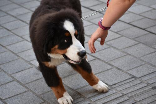 Tratando de tocar a un perro robado
