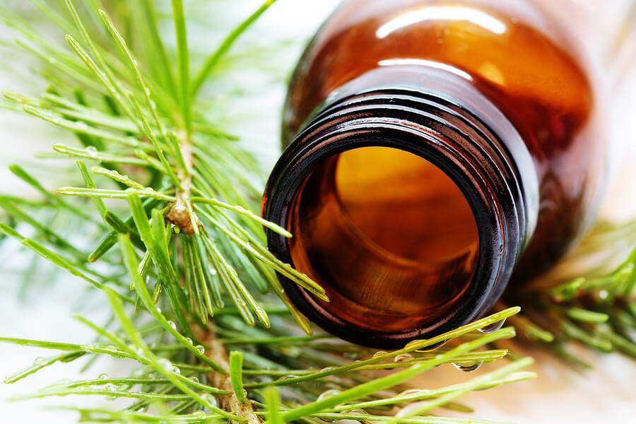 Los remedios herbales para mascotas pueden aportar diversas propiedades positivas.