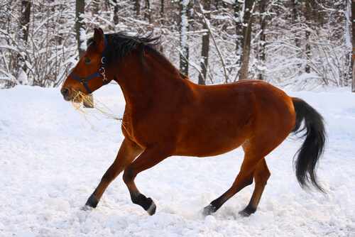 La fuerza del caballo de Estonia