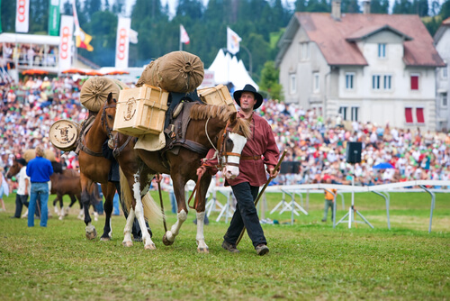 The Freiberger horse is much appreciated in his country, Switzerland.