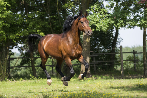 Los orígenes del caballo Maremmano