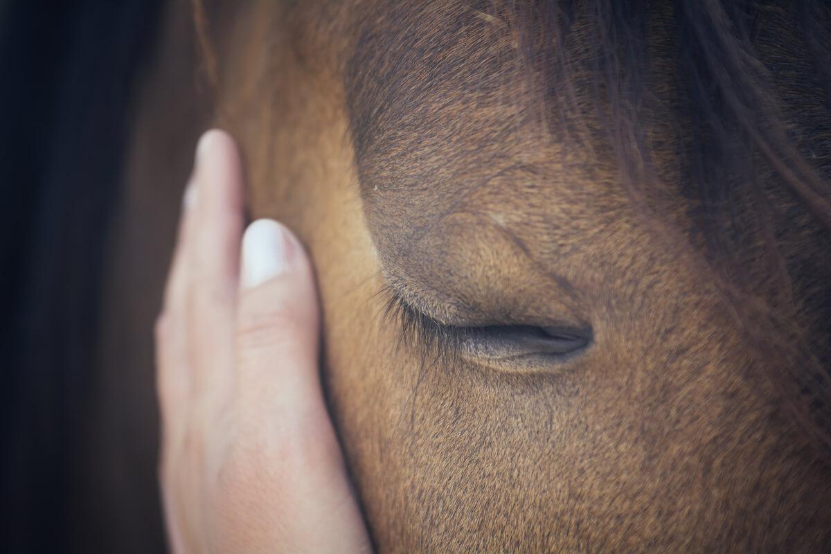 Un caballo con los ojos cerrados.