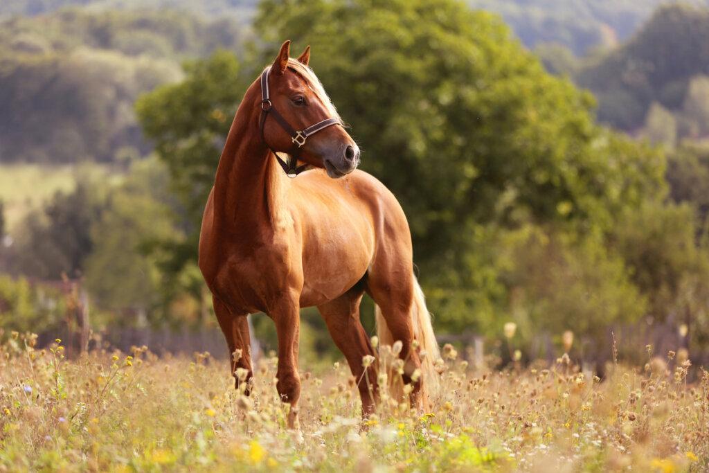 ¿Cómo tratar la azoturia en caballos?