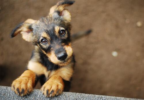 ¿Cómo enseñar a tu cachorro su nombre?