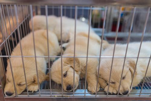 Aspectos legales de los animales en escaparates