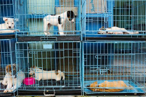 Cachorros en jaulas.