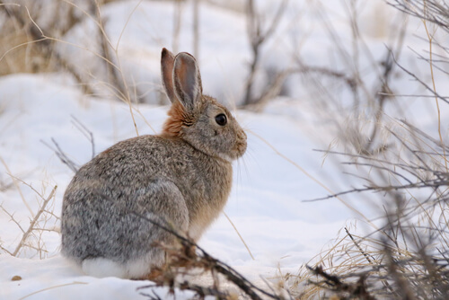 Rabbit in the winter time