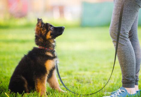 Enseñar a tu cachorro su nombre