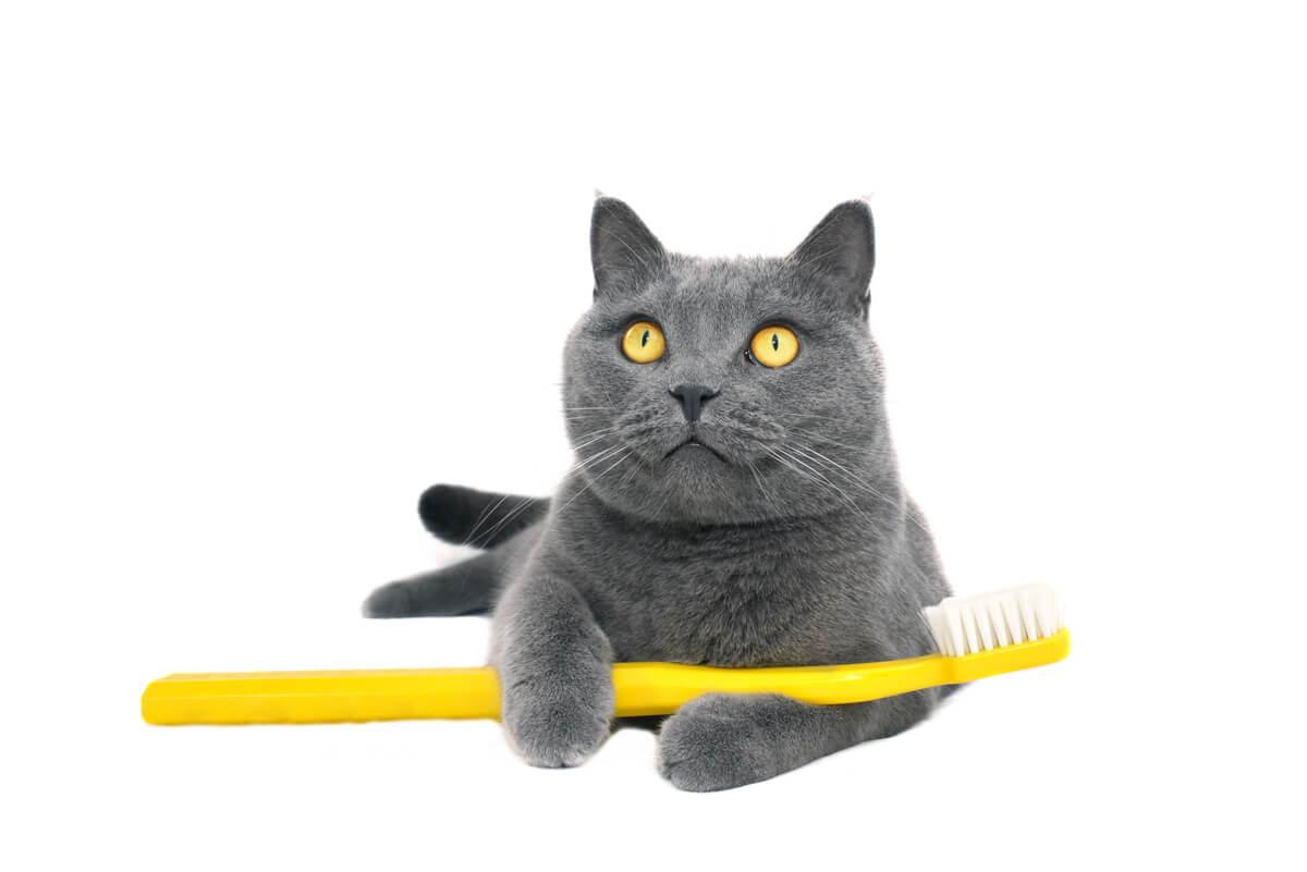Un gato con un cepillo de dientes.