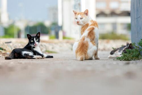 Gatos ferales en la calle.