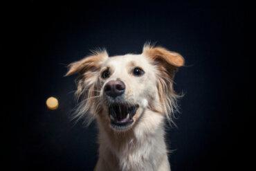 Las golosinas en el entrenamiento para perros