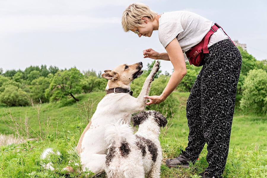 Mujer entrenando a sus perros.