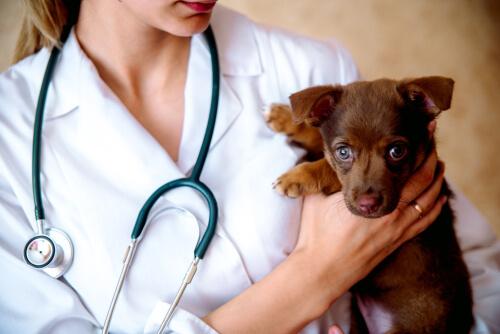 ¿Qué es la responsabilidad veterinaria por negligencia?