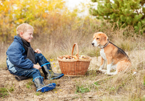 Un niño con un perro cogiendo setas.