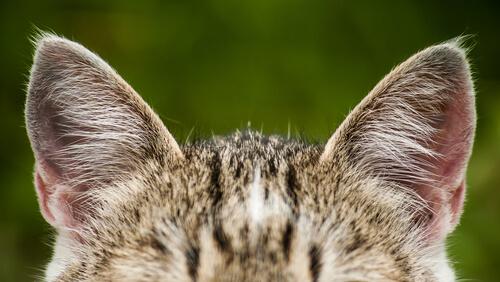 Entiende a tu gato: tips para entender su lenguaje corporal