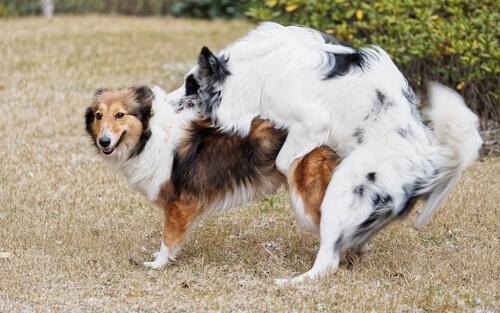 Principales comportamientos del perro después de la castración