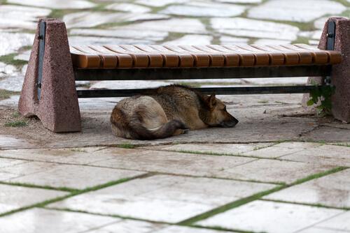 Perro abandonado debajo de un banco de cemento.