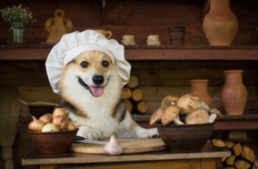 Hongos medicinales para perros ¿Cuáles son?
