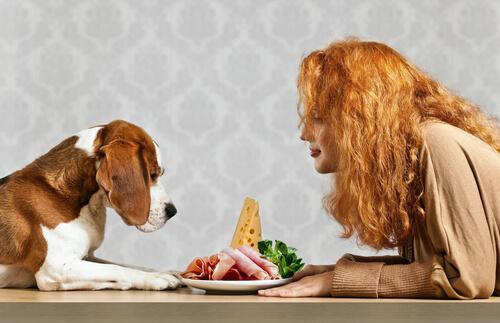 ¿Cuáles son las necesidades nutricionales de un perro?