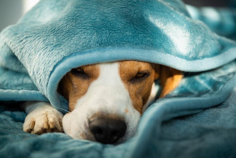 Salud mental y enfermedad en perros: ¿cómo tratarlas?