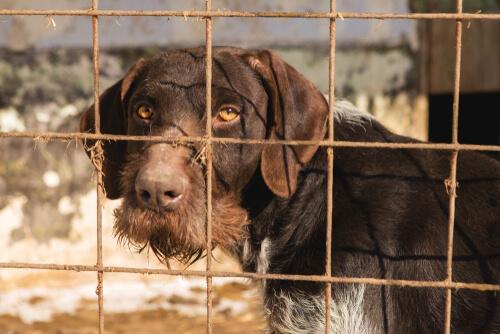 España sigue liderando el ranking de animales abandonados.