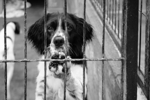 Legalidad de los decomisos en animales