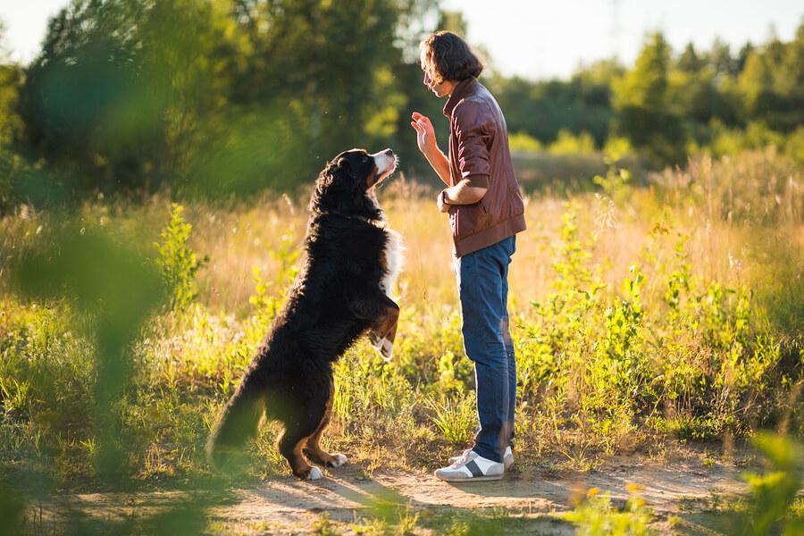 Objetivos del entrenamiento en los perros