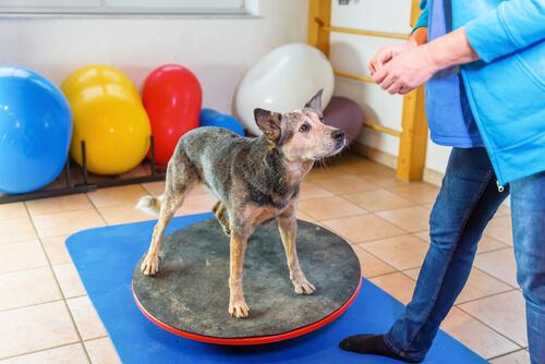 Refuerzo positivo en perros