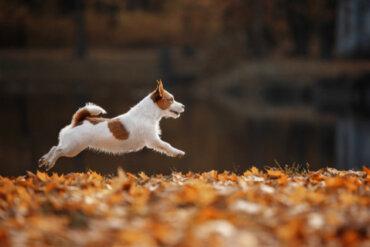 Rutinas de ejercicio para perros: ¿cuáles son las mejores?