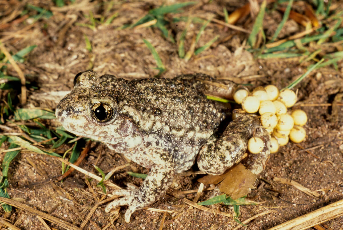 Frogs and toads can be very diverse.