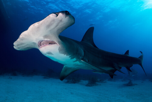 Rarezas y curiosidades del mundo marino