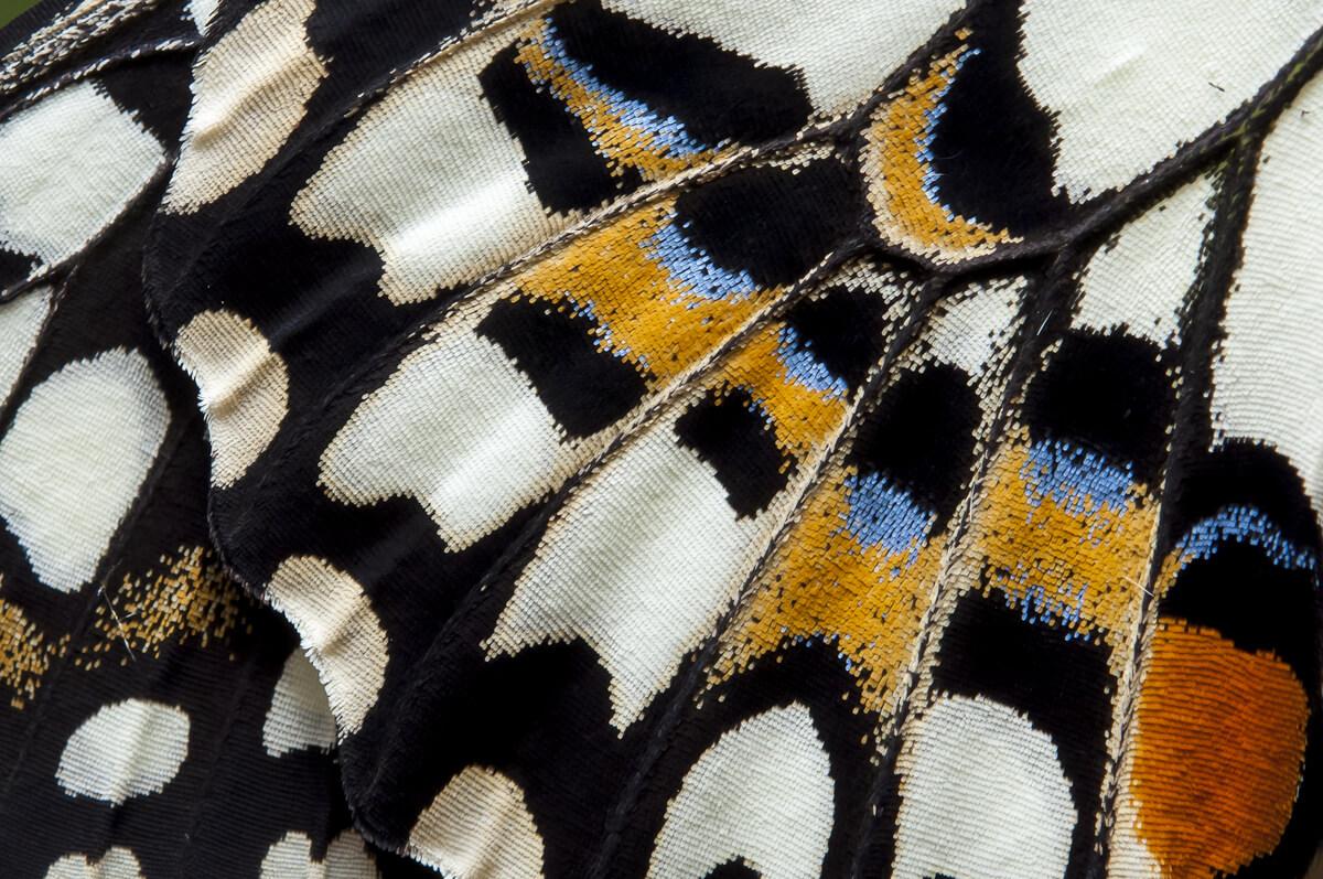 Close-up del ala de una mariposa.