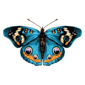 Alas de mariposa: la belleza en escamas