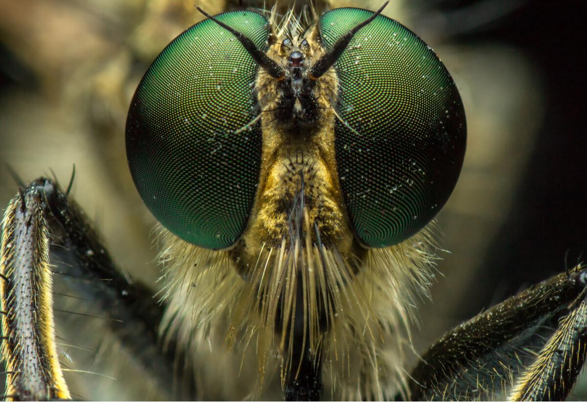Las antenas de un insecto.