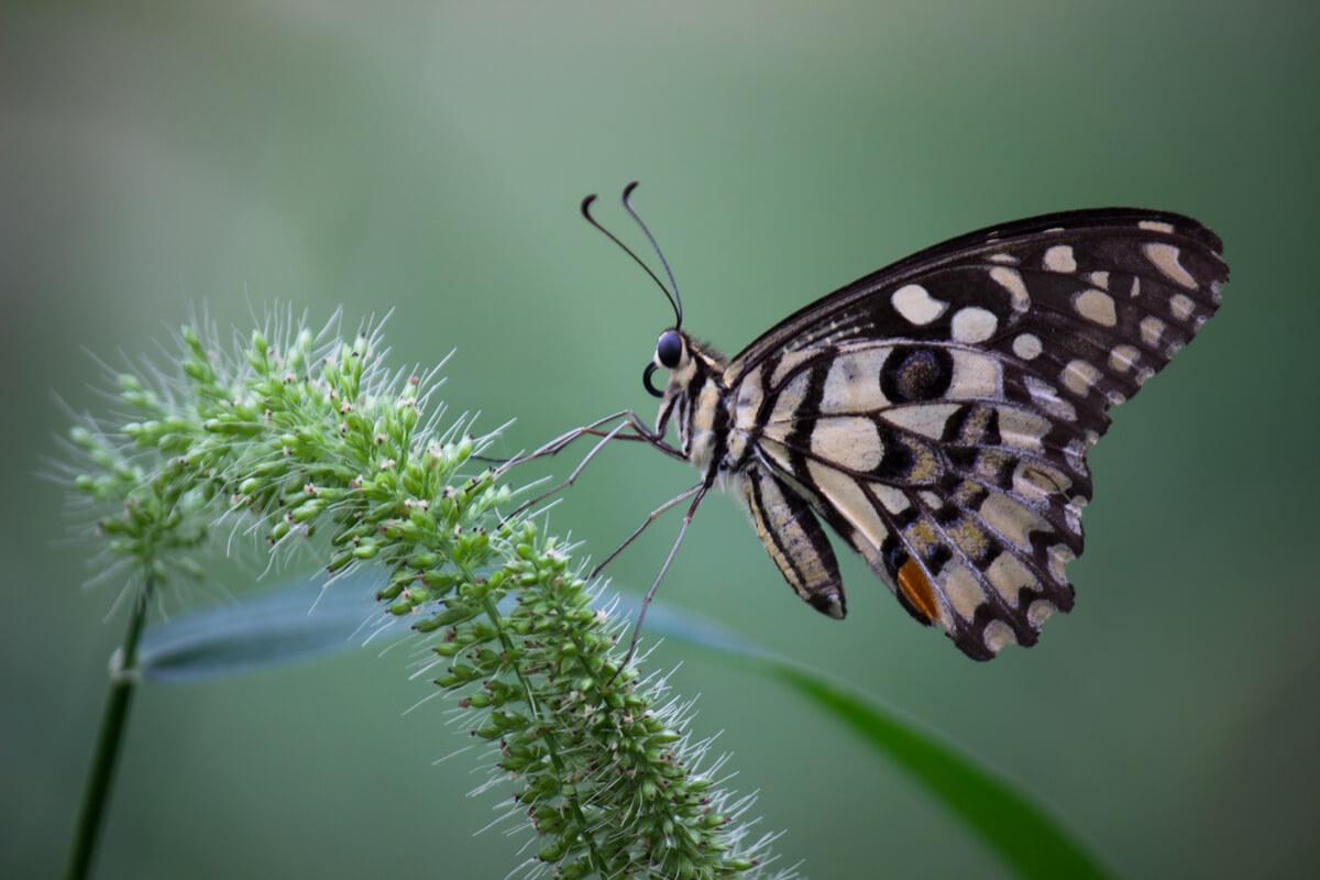 Las antenas de una mariposa.
