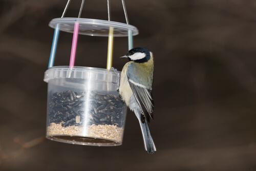 Comedero para aves casero, hecho con plástico.