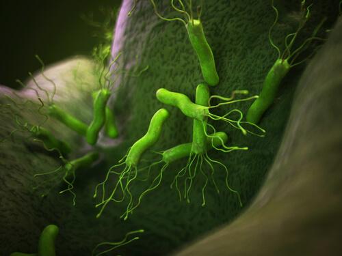 8 bacterias no patógenas comunes en los animales
