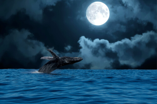 Mitos y realidades sobre la luna llena y el comportamiento animal