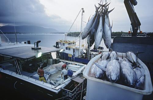 Barco pesquero de atún en Australia.