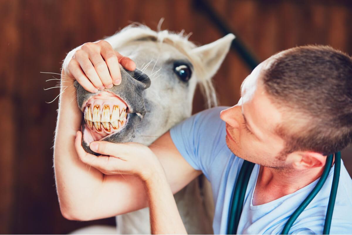 Un caballo en el veterinario.