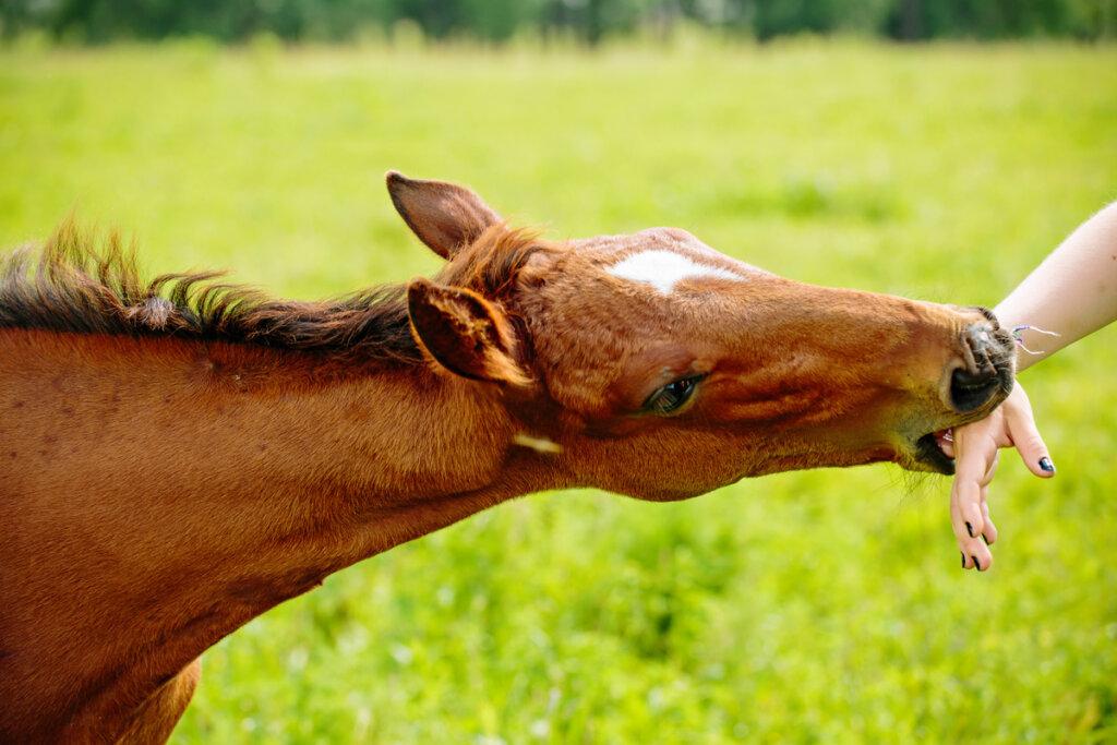 Problemas de comportamiento en equinos