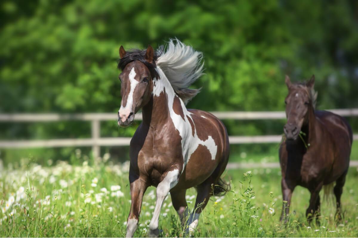 Problemas de comportamiento en equinos.