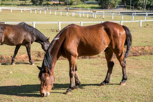 Microorganismos que causan fatiga crónica y delgadez en caballos.
