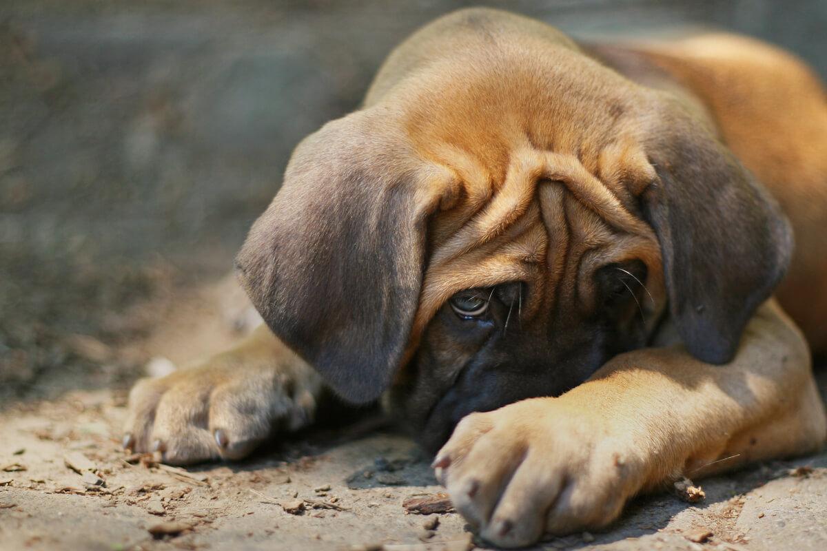 Un cachorro de perro estresado.