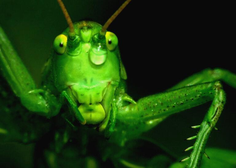 Insectos: por sus antenas los conocerás