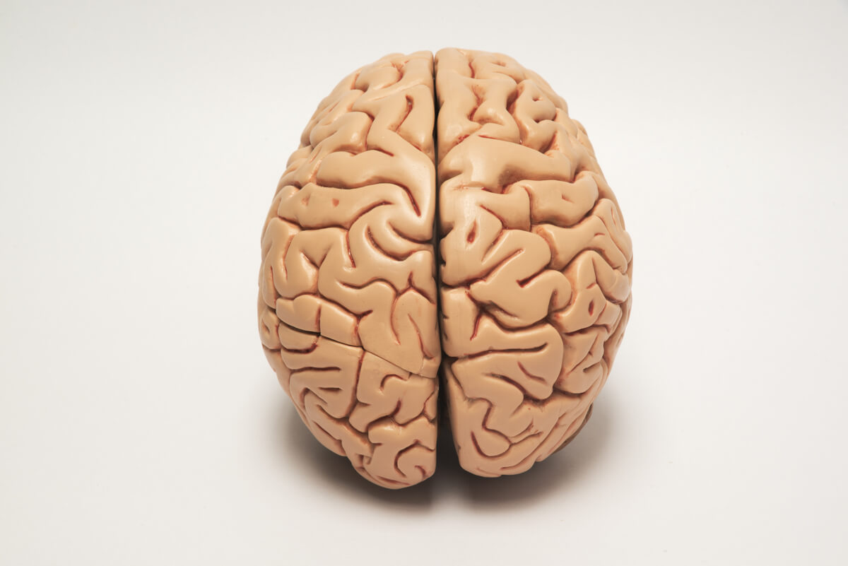 Una figura del cerebro.