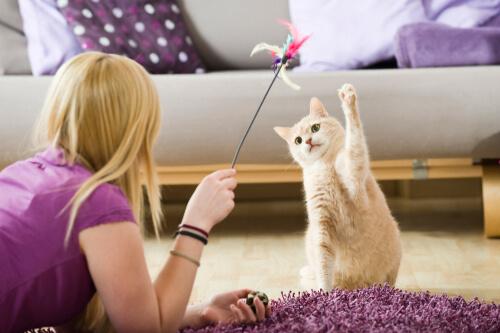 ¿Cómo entretener a las mascotas durante la cuarentena?