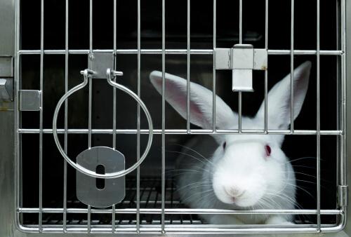 Cuarentena en animales de laboratorio: ¿qué debemos saber?