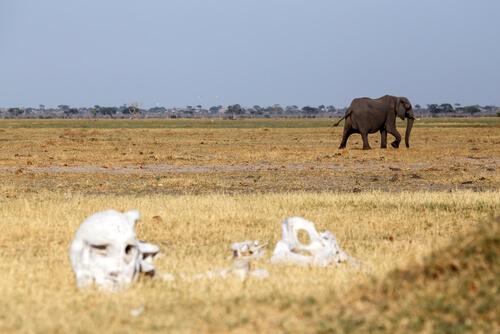 Elefante caminando en la sabana.