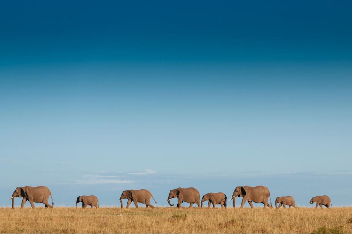 Una familia de elefantes.